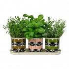 Orla Kiely Set of 3 Herb Pots On Tray - Climbing Rose