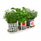 Orla Kiely Set of 3 Herb Pots On Tray - Big Spot