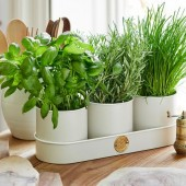 Burgon and Ball Herb Pots by Sophie Conran - Buttermilk